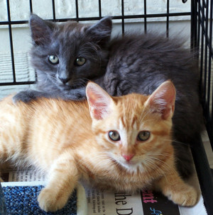 2 baby kitties