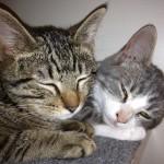 2 cuddlers