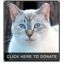 donate3