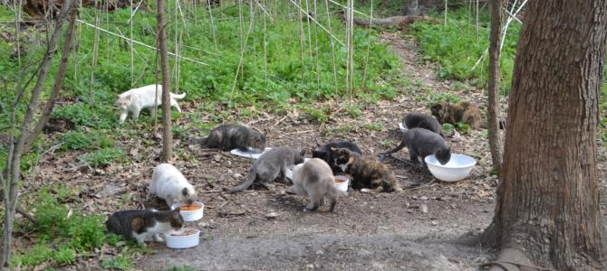 San Antonio Feral Cat Coalition