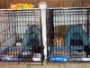 barncats_confined_500x295